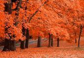Puzzles couleurs d'automne