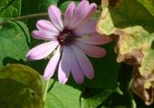 Jeux de puzzle : fleur du jardin