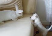 Puzzle gratuit chien et lapin