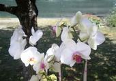 Puzzle gratuit orchidée