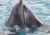 Puzzle Puzzle en ligne dauphins