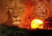 Puzzle en ligne lion