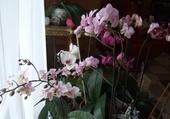 Puzzle Jeu puzzle Orchidées