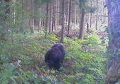 Puzzle Jeu puzzle forêt en creuse