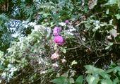 Jeu puzzle une fleure