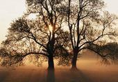 Puzzle en ligne bel arbre