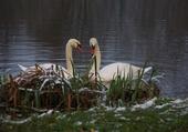 Puzzle flirt aux étangs
