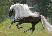 Puzzle gratuit Etalon Mustang
