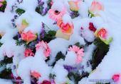 Jeux de puzzle : fleurs sous la neige