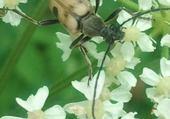 insecte sur les fleurs par hélène