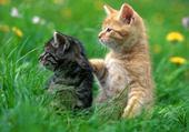 Jeux de puzzle : chatons