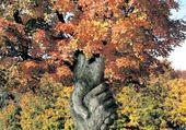 Puzzles arbre