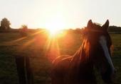 Puzzle Cheval et coucher de soleil