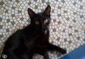 Puzzle Puzzles chat noir