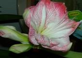 Jeux de puzzle : jolie fleur