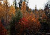 Puzzle Erstein en automne
