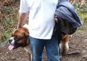Puzzle en ligne bernard et son chien