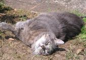 Puzzles chat et bain de soleil