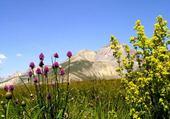 Puzzles Flore de montagne