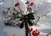 Puzzle en ligne Fleure des neiges
