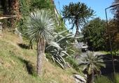 Puzzle Succulentes