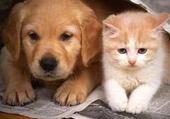Puzzles chien et chat
