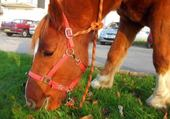 Puzzle un cheval qui mange