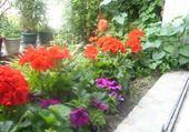 Puzzle gratuit jardinière en fleurs