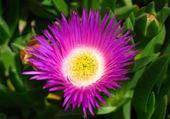 Puzzle gratuit fleur
