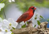 Puzzle oiseau rouge