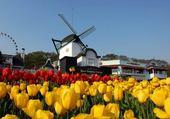 Puzzle Puzzle en ligne tulip