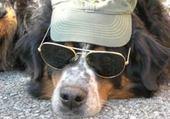 Puzzle le chien cool