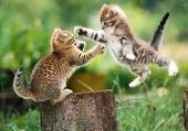 Puzzle le chat contre attaque