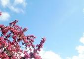 Jeux de puzzle : Arbre fleuri au printemps