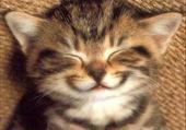 Puzzles un petit sourire