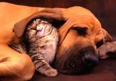 Puzzle entre chien et chat