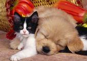 Puzzle chiot avec un chat