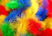 Puzzle gratuit plume couleurs