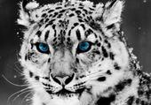 Puzzles leopard