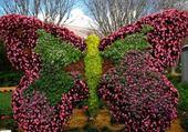 Jeux de puzzle : papillon en fleurs par hélène