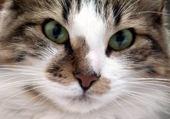 Puzzle en ligne Beau chat