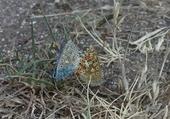 Puzzle couple de papillons