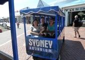 Puzzle Tram Sydney Aquarium
