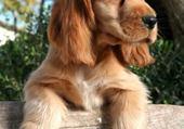 Puzzle en ligne chien