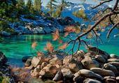 Puzzle nature