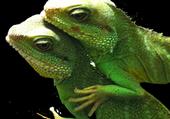 Puzzle Le Forum des Reptiles