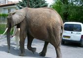 Puzzle Un éléphant en ville