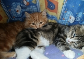 Puzzle Puzzle les chatons dans le panier