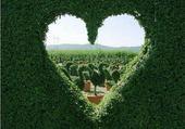 Coeur botanique