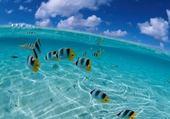 Puzzle Puzzle poissons
